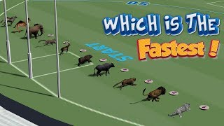 Which Is The Fastest Animal? (Wild Animal Race)