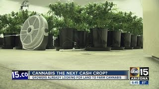 Growers looking for Arizona land to farm cannabis