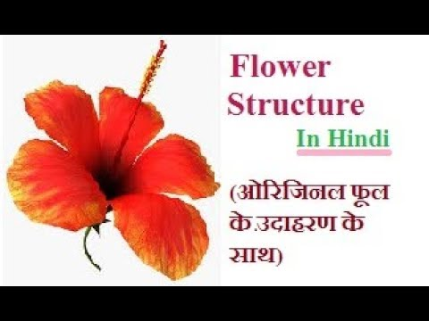 Flower Structure With Original Flower As A Example In Hindi Youtube