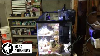 How To Install a Fluval Mini Protein Skimmer: 10 Gallon Reef Tank.