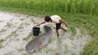 Best Hand Fishing Video - Smart Boy Catching Big Catfish By Hand Fishing
