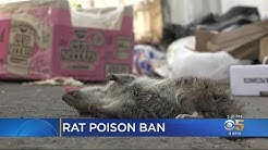 Rat-Infested Cities, Pest Control Industry Concerned With State Rat Poison Ban