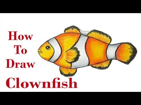 Clownfish Step By Step (very Easy) //  How To Draw Fish