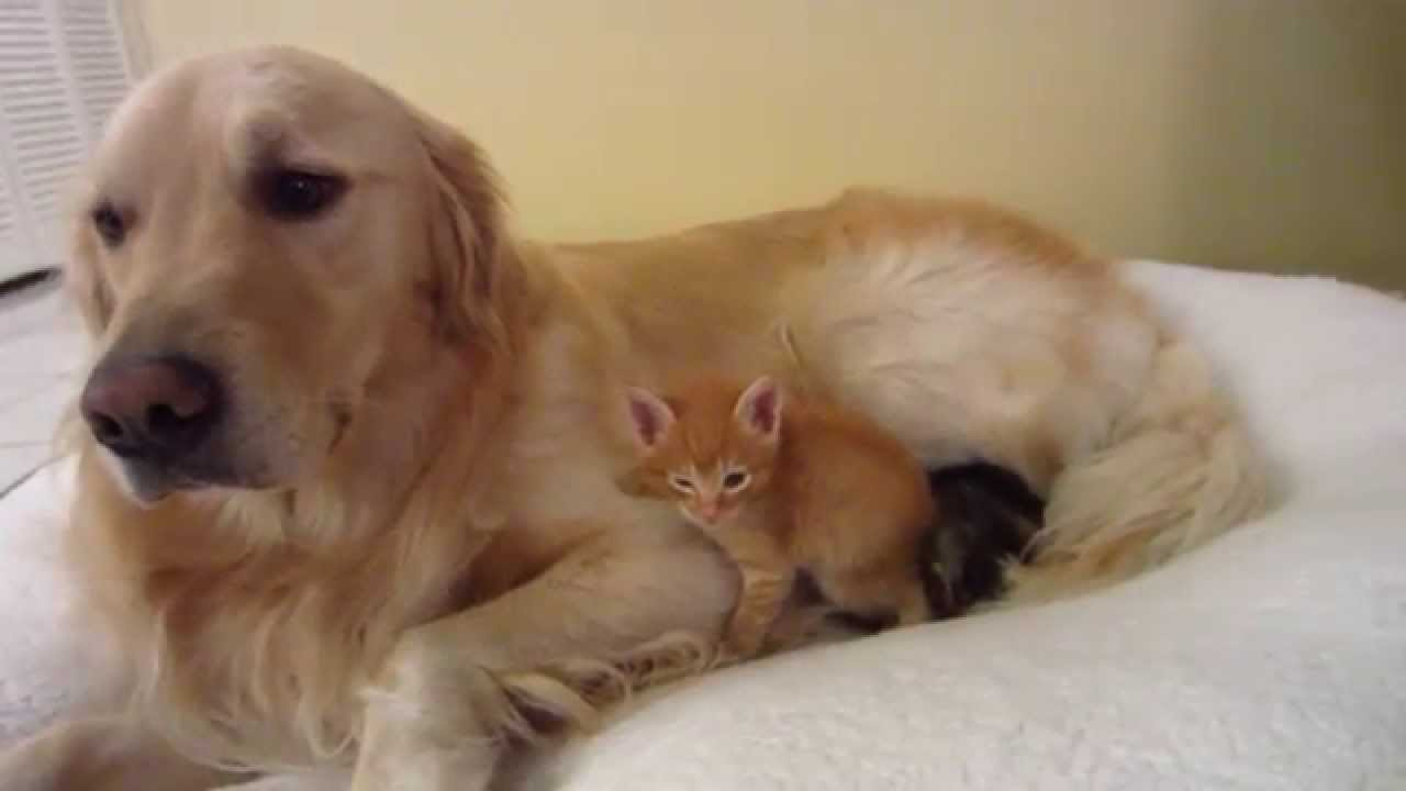 cute kittens and puppies cuddling