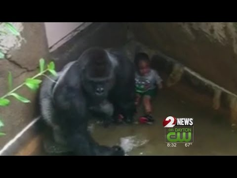 Child's parents won't face charges after fatal gorilla shooting
