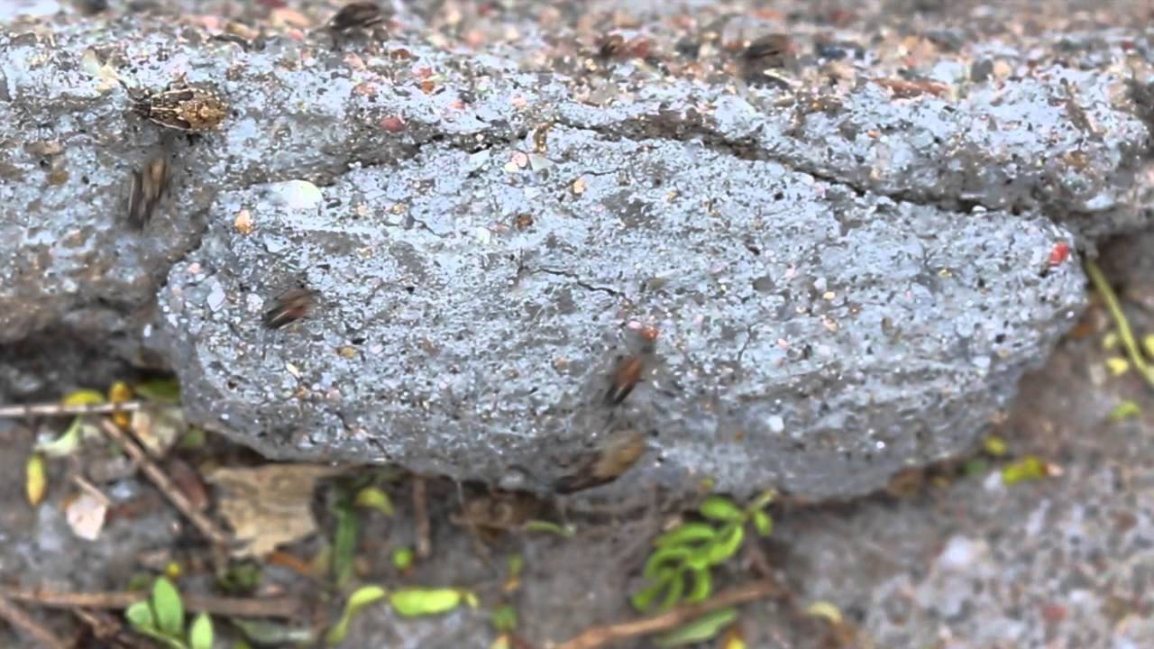 hordes of bugs migrating across my backyard youtube