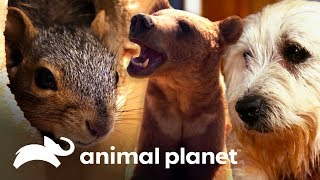 Increíbles historias de animales rescatados | Dr. Jeff, Veterinario | Animal Planet
