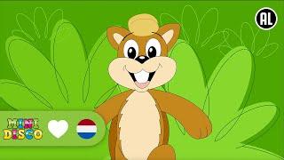Minidisco - Eekhoorn