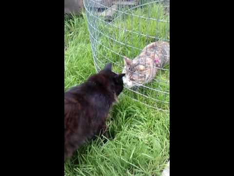 знакомства кошек