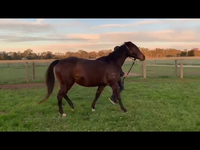 Sanity by Lonhro from Firm | 5yo Brown Mare