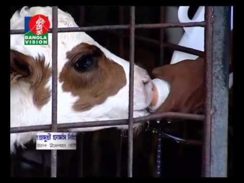 Nahar Dairy