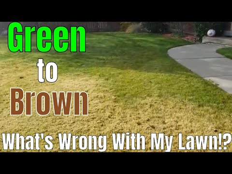 DIY How to fix ugly lawn. What's wrong, Matted Grass, Dead dormant brown bermuda grass in the lawn.