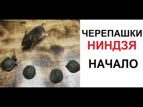 Макс Максимов. Черепашки-ниндзя. НАЧАЛО