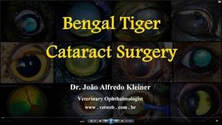 Bengal Tiger Cataract Surgery Voice Over