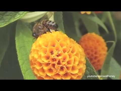 EU Bans Bee Killing Pesticide