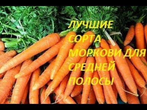 лучшие сорта моркови для средней