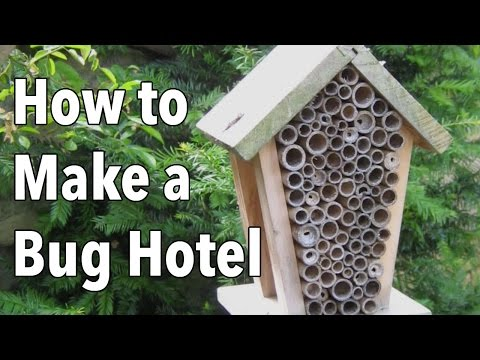 Bug Hotel: How to Make a Home for Beneficial Insects