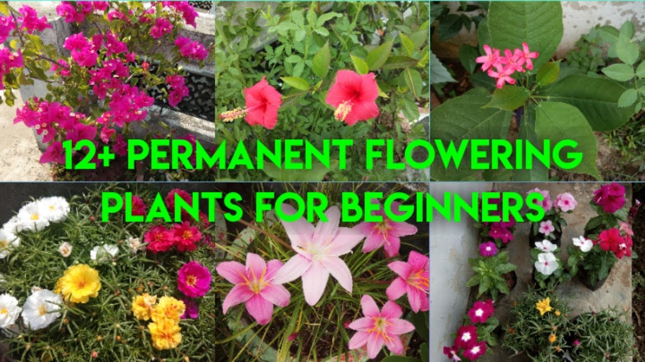12 Low Maintenance Easy To Grow Low Cost Permanent Flowering Plants For Beginners Youtube