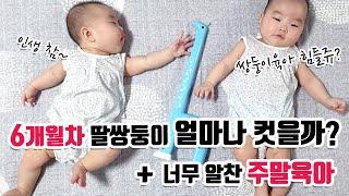 6개월차 쌍둥이육아아기…