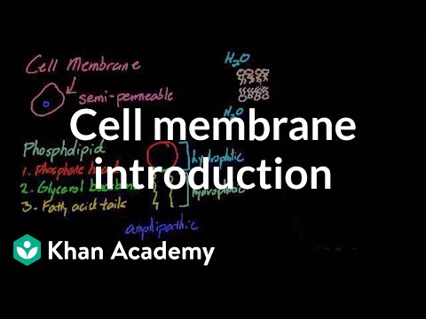 Cell membrane introduction | Cells | MCAT | Khan Academy