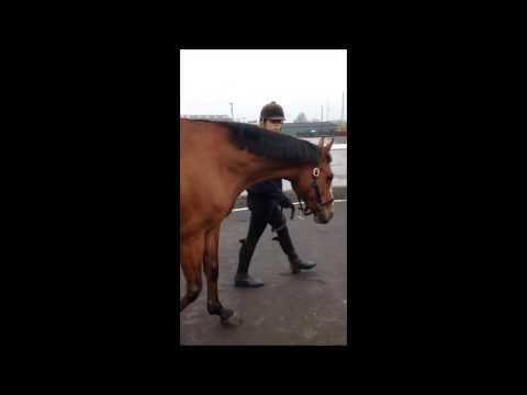 animal health video horses