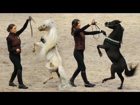 Такое не увидишь даже в цирке! Американские миниатюрные лошади #ИППОсфера 2019 /пониферма #ИДАЛЬГО