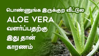 5 Amazing  Beauty Tips with Aloe Vera  Tamil Beauty Tv