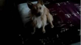Mój pies Fenek!