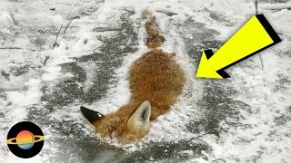 10 zamarzniętych zwierząt, w które nie uwierzysz