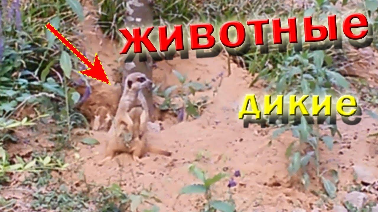 Животные немецкий зоопарк