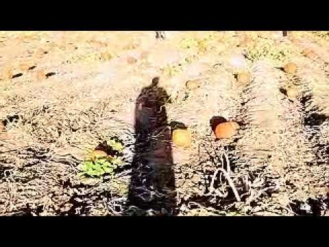 adventure vlog#1
