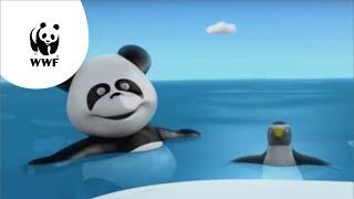 Kijk Pipapanda op zoek naar de Zuidpool filmpje