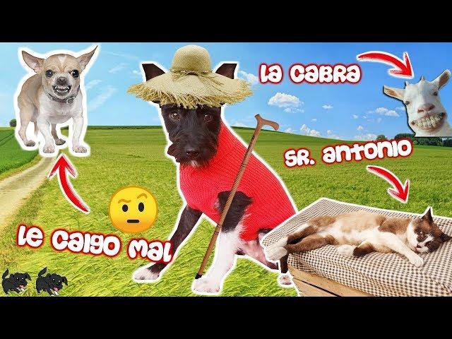 ¡TODOS LOS ANIMALES DEL PUEBLO! Lana Perros Divertidos