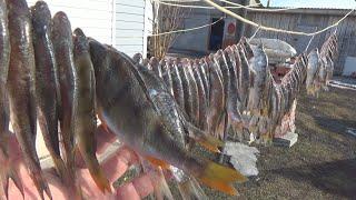 Как Солить и Сушить Рыбу Вяленая Рыба Простой Способ Засолки Чебака Плотвы