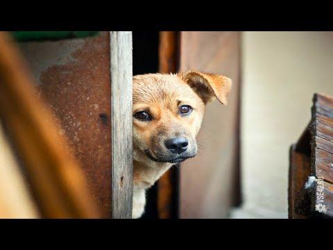 Осиротевшие щенки плакали у холодных гаражей
