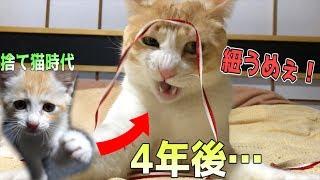 久しぶりに子猫時代の動画を見返したけど面影すら無くなってて笑いまし...
