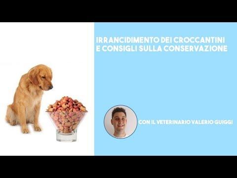 L'alimentazione su misura per i cuccioli di taglia mini from YouTube · Duration:  2 minutes 22 seconds