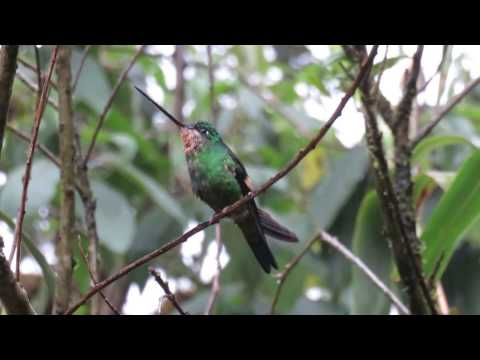 Yanacocha Nature Reserve