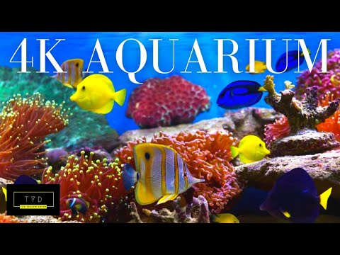 4K TANG | Aquirium Footage Of Ambient Music & Yellow Tang Fish | Music to get you through the week