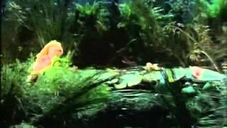 Muppets - Never smile at a crocodile