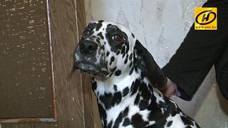 Породистую собаку не могут поделить три жительницы Витебска