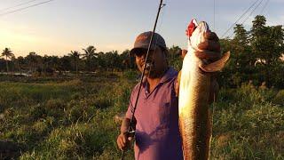 ഫ്രോഗ് ഉപയോഗിച്ചു എങ്ങനെ ചേറുമീൻ പിടിക്കാം -snakehead fishing