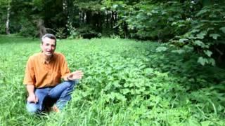 Markus Strauß - Simply Wild - Brennessel