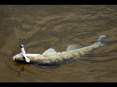 рыбалка на дону в рогожкино сегодня осенью