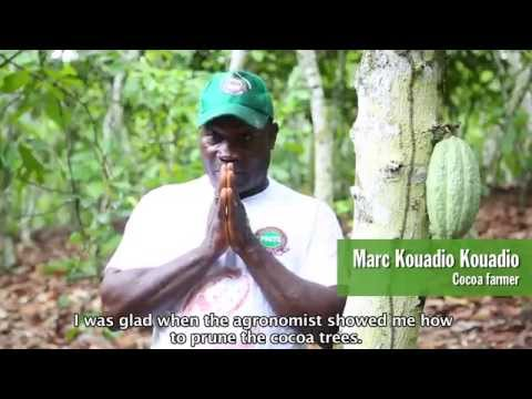 PACTS agronomy for cocoa sustainability