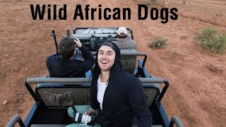 Wild African Dogs I Safari in South Africa