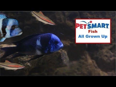 Updates On Every Fish I Bought From Petsmart/Petco
