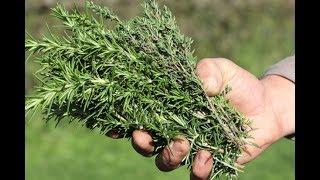 Cette plante puissante que vous avez dans votre cuisine peut vous sauver la vie!Santé&Divertissement