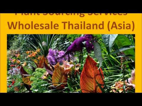 Plant, Tree and Flower Sourcing Services from Thailand (Asia)
