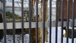 В зоопарке Екатеринбурга проснулись медведи